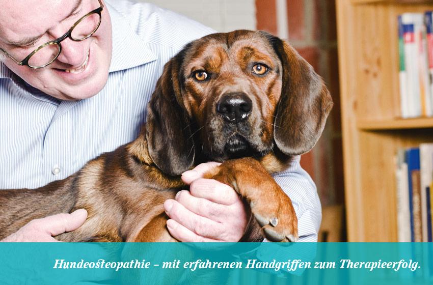 Hundeosteopathie Behandlung-1