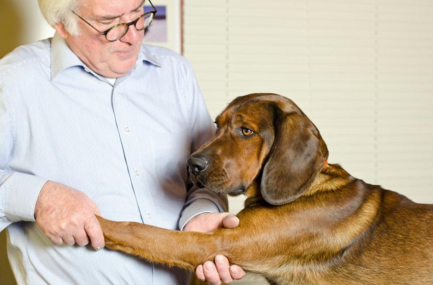 Hundeosteopathie Behandlung-2