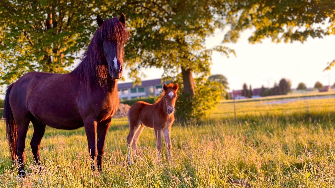 Ihr Traumpferd vom Rappenhof aus Breuna
