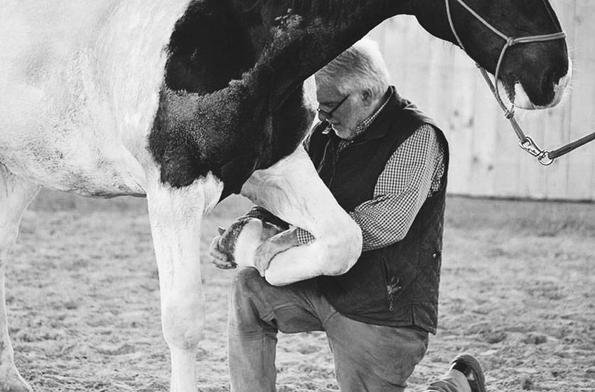 Pferdeosteopathie manuelle Behandlung